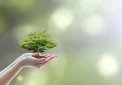 Arbor Day: The Role of Trees in Your Business